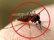 Уничтожение комаров в Алматы и Алматинской области
